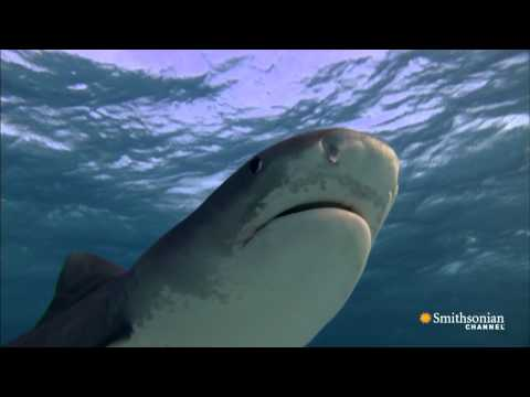 Shark Therapy - Fear Itself