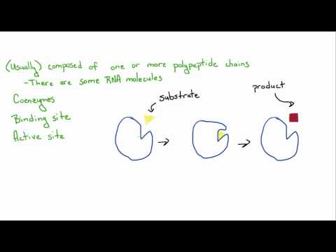 Introduction to Biology - 10 - Enzymes