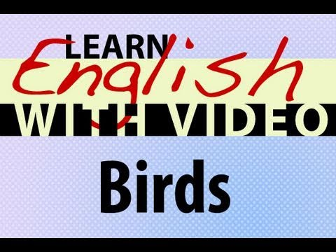 Learn English with Video - Birds