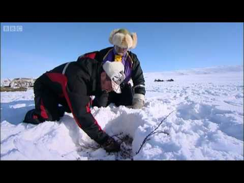 Reindeer farmers in Lapland - Johnny Goes to Lapland - BBC