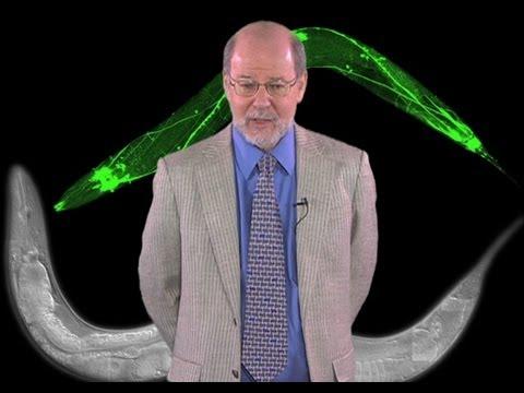 H. Robert Horvitz (MIT/HHMI): Discovering Programmed Cell Death
