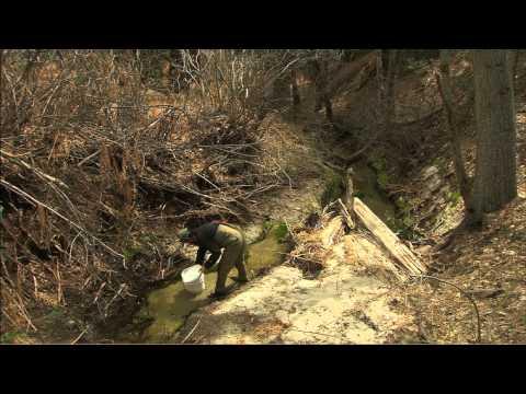 Rare Tadpoles Released Into Wild