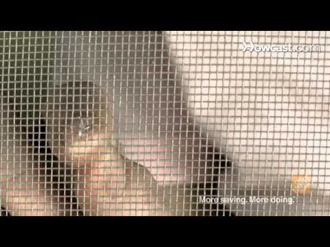 Quick Tips: How To Repair Small Holes in Window Screens