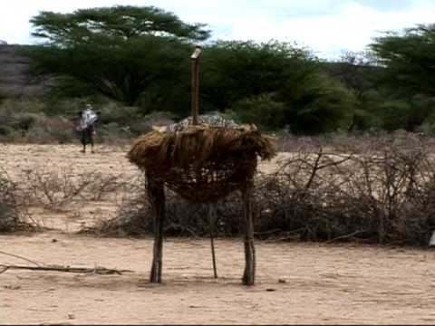 Early childhood programme for the nomadic Loipi of northern Kenya