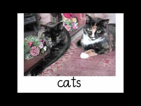 c - cat, cod, act