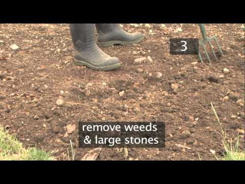 How To Transplant Seedlings InTo The Ground