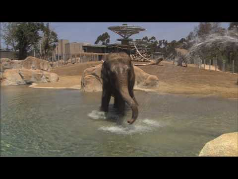Elephants Explore New Exhibit for the First Time
