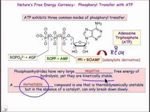 Phosphoanhydrides: Biological Energy Transfer