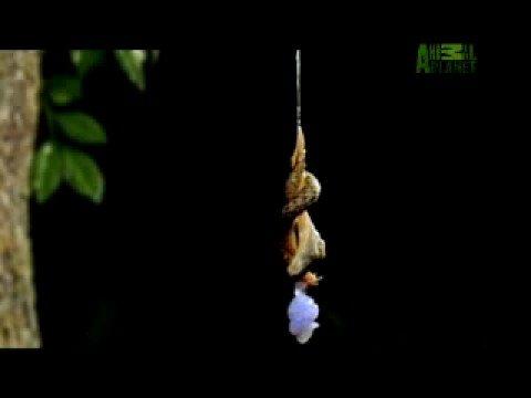 WTF! - Leopard Slug Mating