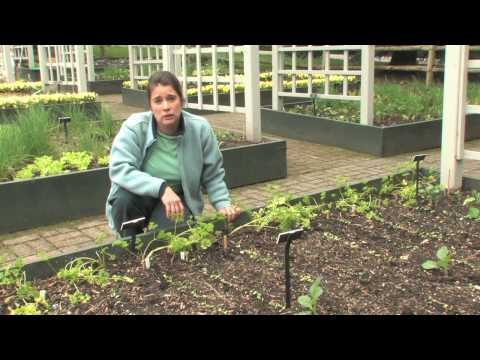 The Edible Garden — Sowing Seeds Outdoors