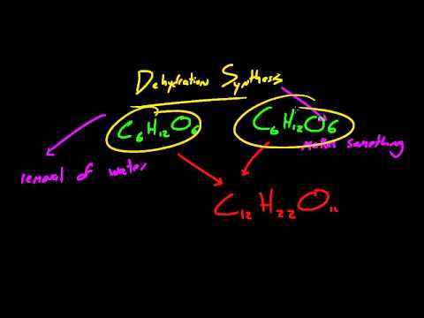 Biology Lecture - 9 - Sugars
