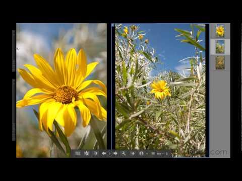 Comparing photos in Photoshop Elements 9 | lynda.com tutorial