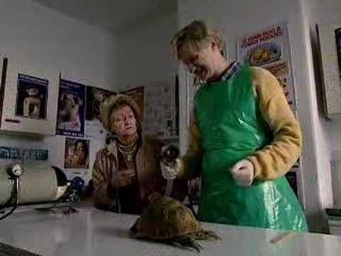 Mr Chinnery - tortoise - The League of Gentlemen - BBC comedy