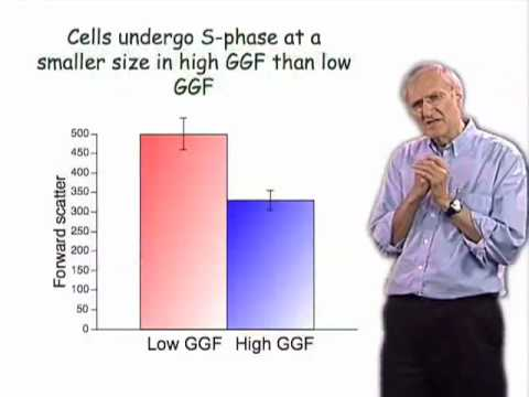 Martin Raff (UCL) Part 1: Regulation of Cell Size