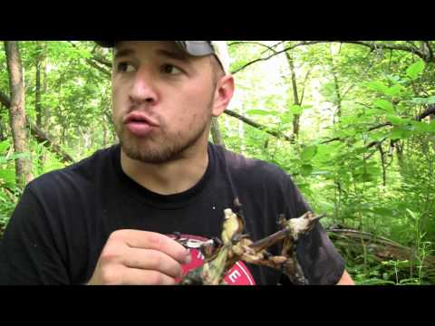 Surviving the Wilderness 2 - Episode 27 - Gutting and Eating
