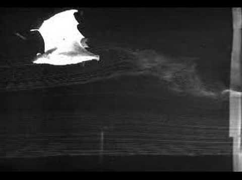 Lifting the fog on bat flight