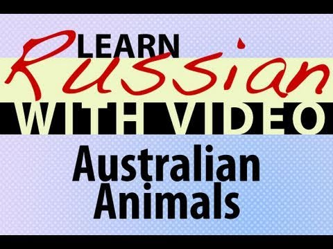 Learn Russian with Video - Australian Animals