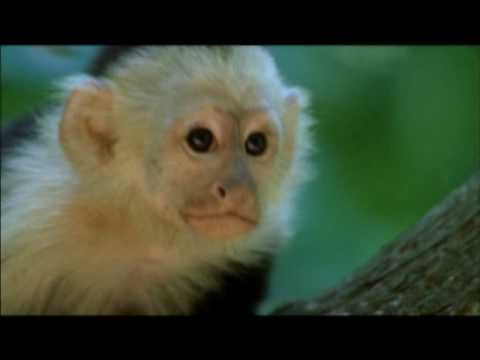NATURE | Clever Monkeys | Preview | PBS