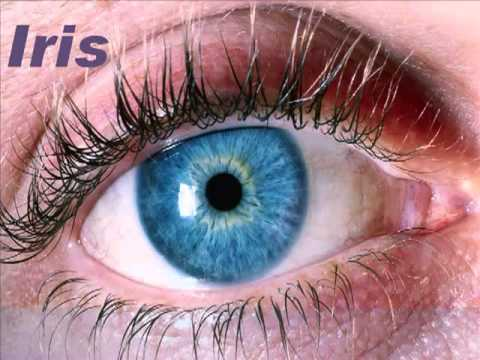 An Albino's Guide To The Eye: The Cornea & Iris