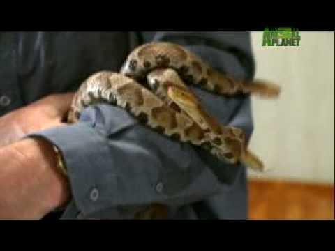 Reptile Religion