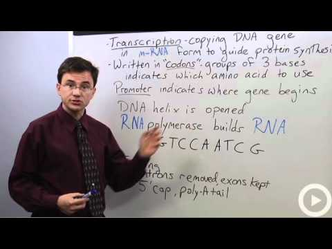 Biology Transcription