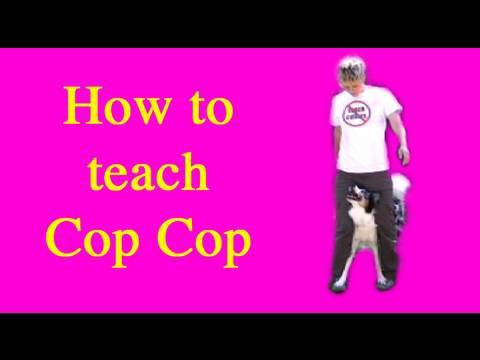 How to teach the trick Cop Cop dog training clicker