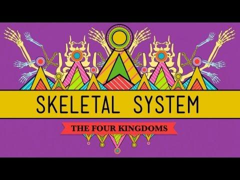 The Skeletal System: It's ALIVE! - CrashCourse Biology #30