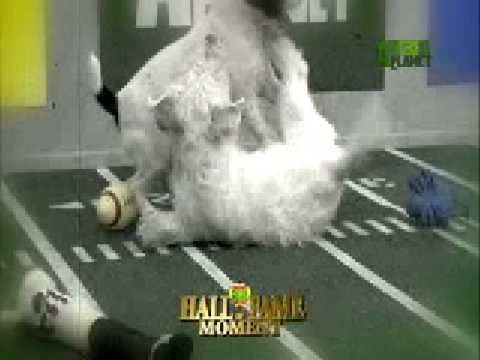 Puppy Bowl Classic: Hall of Fame