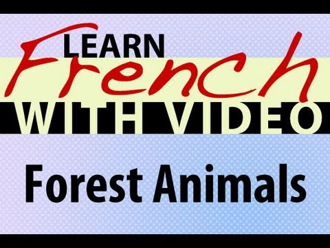 Learn French with Videos - Forest Animals