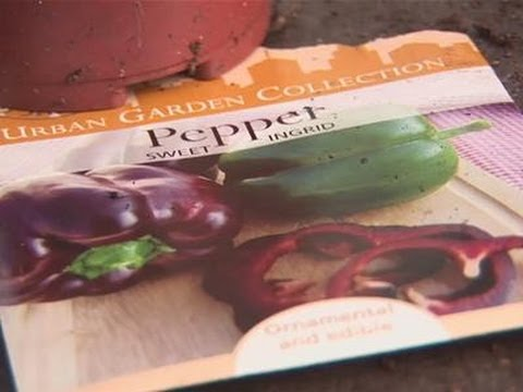 How To Plant Peppers From Seeds