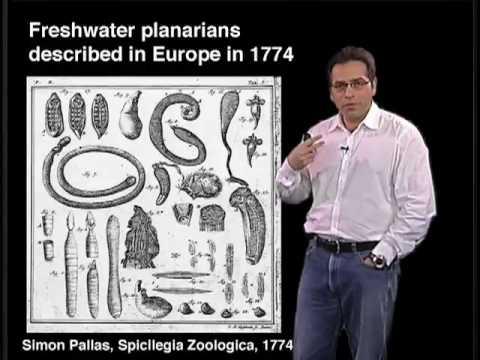 Alejandro Sanchez-Alvarado  (Univ Utah) Part 2:  Principles of Planarian Regeneration