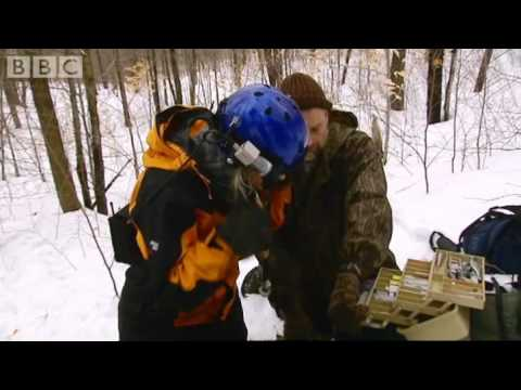 Sedating a mother bear - Vets in the Wild West - BBC Animals