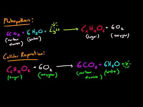 Biology Lecture - 31 - Photosynthesis and Cellular Respiration