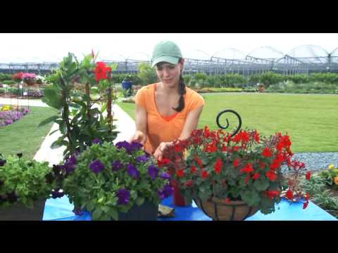 Tips on 3 Types of Direct Sunlight Garden Flowers