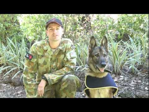 Military Working Dog (retired) Sharman Receives a Commendation