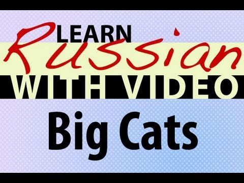 Learn Russian with Video - Big Cats