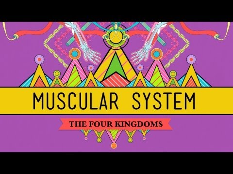 Big Guns: The Muscular System - CrashCourse Biology #31
