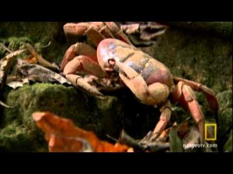 Red Crab Marathon