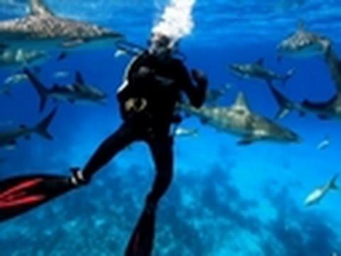 Shark Week - Shark City | Andy Samberg Attacked By Sharks?