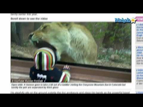 Lion Tries To Eat Toddler in Viral Video