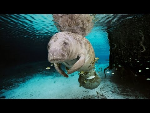 National Geographic Live! - The Mermaid Myth