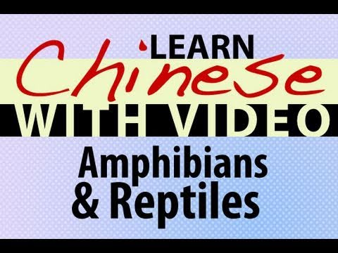 Learn Chinese with Video - Amphibians and Reptiles