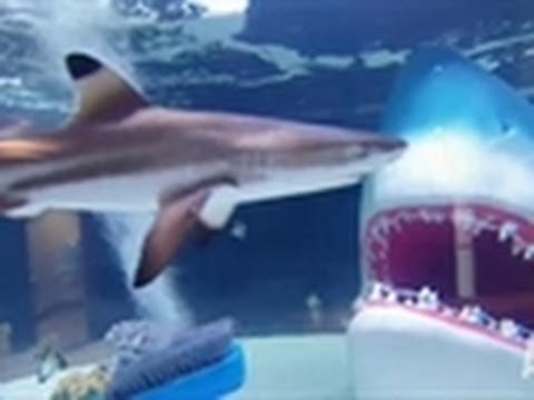 Shark Tank Reveal | Tanked!