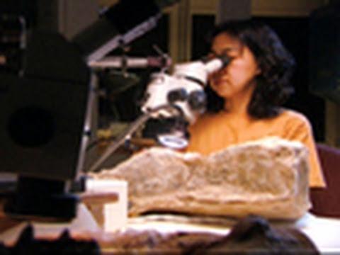 Preparing a Fossil