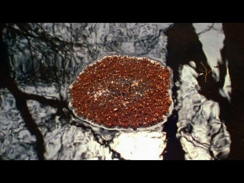 World's Weirdest - Fire Ants Make Living Raft