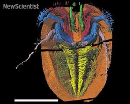 New Scientist video round-up - April 18, 2008