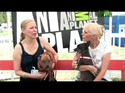 World's Ugliest Dog - Everyone Loves Who??