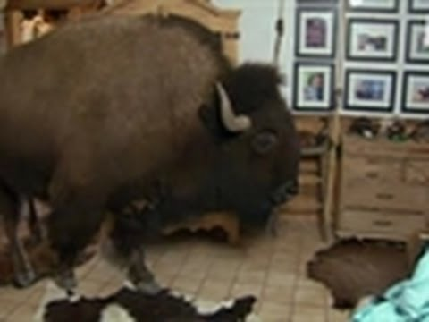 Bad Dog - Wild Thing the Buffalo