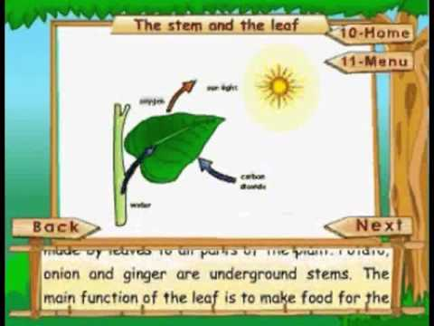 Kids Animation - The Stem And The Leaf - Learn Series