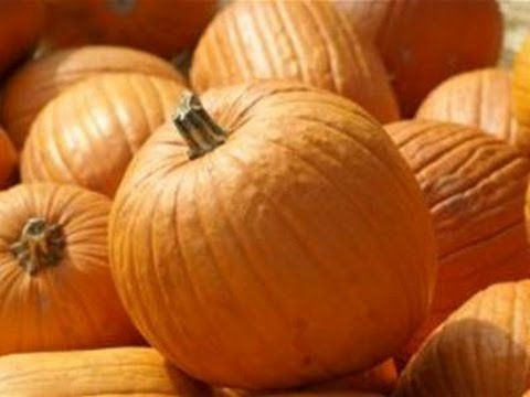 How To Plant Pumpkins